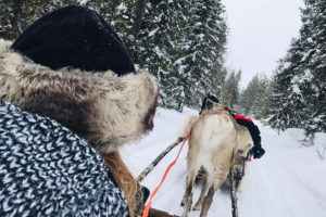 Business Coaching - Finland4